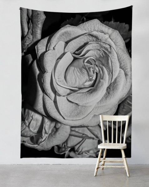 black-and-white-rose
